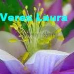 Veres Laura