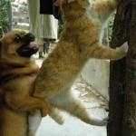 Cainele si pisica Berbec, saptamana 25 - 31 martie 2012
