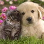 Cainele si pisica Leu,  saptamana 25 - 31 martie 2012