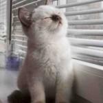 Cainele si pisica Balanta, saptamana 25 – 31 martie 2012