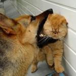 Cainele si pisica Scorpion,  saptamana 25 – 31 martie 2012