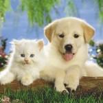 Cainele si pisica Sagetator, saptamana 25 – 31 martie 2012