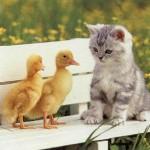 Cainele si pisica Berbec, saptamana 1 – 7 aprilie 2012