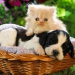 Cainele si pisica Gemeni, saptamana 1 – 7 aprilie 2012