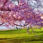 Energia astrala a zilei, 22 aprilie 2014