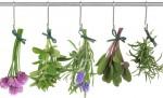 Ceaiul – protectie imunitara naturista in functie de zodia ta